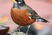 Bird Identification / Learning to identify birds.
