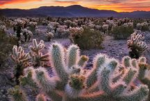 Vetplante en kaktusse