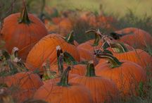 Halloween & Fall / by Theda Weatherly