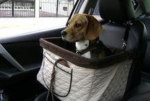 Perro feliz / Asiento portátil para mascota