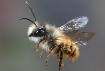 bees / by Angie Jorgensen
