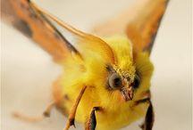 Fascinating Creatures