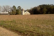 North Carolina / Learn a little about where we're from, home sweet home y'all! / by North Carolina Sweet Potatoes