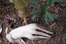 Mushrooms n fungus