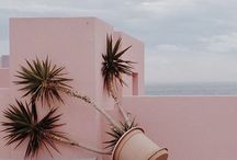 Pastel and Palms