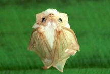 Animals / Cute, frightening and mesmerising animals from around the world.