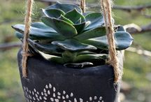 Plantas/Gardening