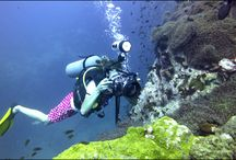Master Scuba Diver Trainers / The PADI Master Scuba Diver Trainer rating sets you apart as a dive instructor who takes continuing education seriously and is committed to teaching a variety of courses.