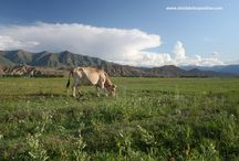Kyrgyzstan / The nature of Kyrgyzstan