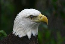 Eagle ideas