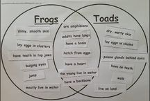 Theme - Frogs and Toads