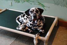 Dalmatian / Celebrating Dalmatians / by Kuranda Dog Beds