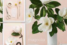 Craft- Flower tutorials / by Debra NZ
