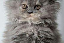 Katter  - flotte