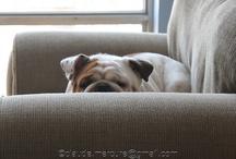 I Love Bulldogs! / by Jinny Meyer