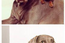 doggie;)