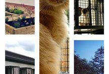 Cat Window Boxes