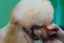 Companion grooming
