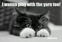 Lovely Cats / Super lieve katten