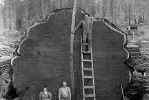 Ye Olde Time Wood Work