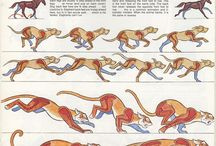 Animation Reference