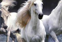 Horses / by Jakki Coburn