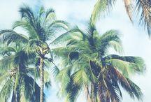 Pretty Palms