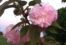 Garden - In my Garden there is Hope