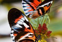 Mariposas / De todos los colores