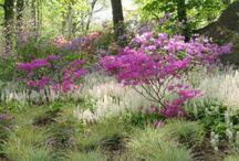 Tiarella Combinations / Plant partnerships that include foamflowers