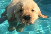 puppy's zwemmen