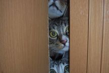 cats are curious!