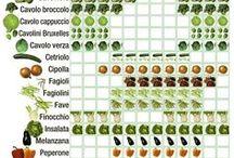 lista frutta e verdura di stagione