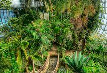 Tropical center