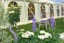 Summer Weddings / There's nothing better than enjoying the sun on your big day with a Marquee Wedding.