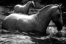Horses / by J Hugdahl