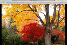 Seasons / Beauty of Nature in every Season