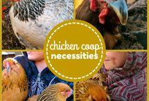 Chicken Coops / by Jacqueline Presslauer