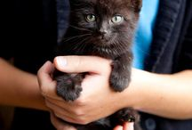 LUNAtic / Little black cat