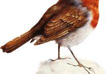 Birdies (Illustration)