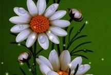 gif flowers