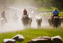 A day on the 320 Ranch