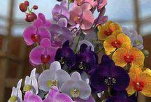 fiori / Fiori