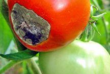 Garden you way to vegetables! / by Andi of Longmeadow Farm