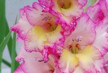 Flores para o mundo de Lannee