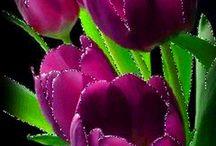szép  csillogó  virágok