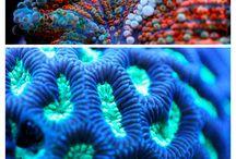 Marine Life GCSE textiles exam prep 2016