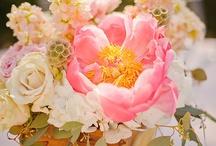 Peach / by Maxit Flower Design