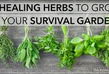 Herbs to have in your survival garden / There are some herbs you should plan on having or growing yourself. In case the SHTF