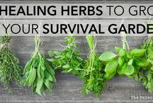herb/tea/fruit garden